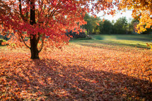 fall leaves under a tree