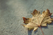 wet fall leaf on concrete