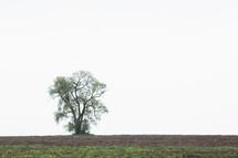 a lone tree in a field