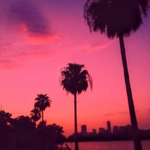 palm trees under a pink sky at sunset