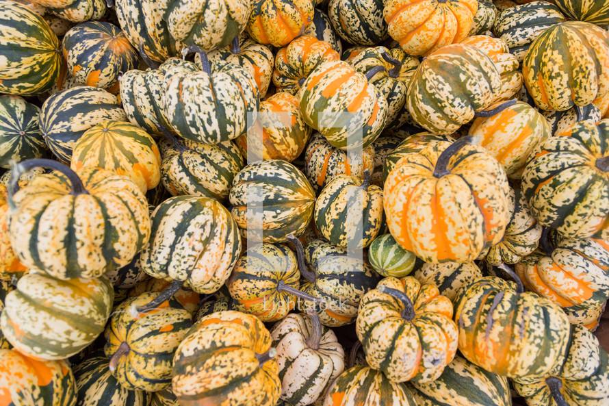 orange and green striped pumpkins