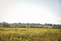 an over grown field