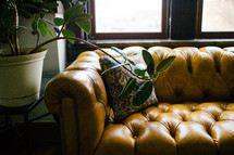 throw pillow on a leather couch and house plant