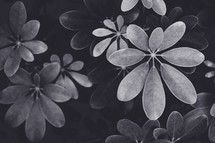 leaves on a bush in black and white