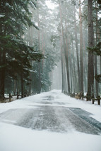 snow on a road and forest