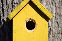 a yellow birdhouse with squirrel chew marks hanging on an oak tree