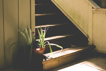 plants at the bottom of a staircase in sunlight