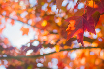 red fall leaves on a tree branch