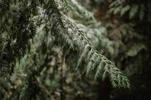 fern fronds in dark forest