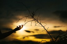 a woman touching thorns on a branch