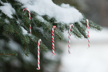 candy canes hanging on a snow covered tree