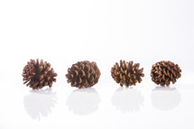 pinecones on a white background