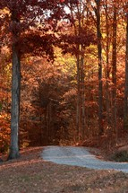 a gravel road through a fall forest