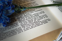 blue flower on the pages of a Bible