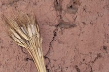 Stalks of wheat against textured clay wall