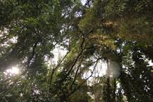 jungle trees in Hawaii