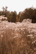 brown vegetation outdoors