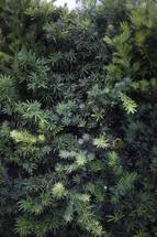 green leaves on a bush