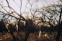 winter trees in a field