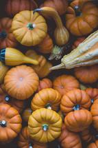 gourds and mini pumpkins