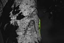 green anole lizard on a tree