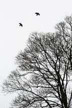 birds soaring over bare tree branches
