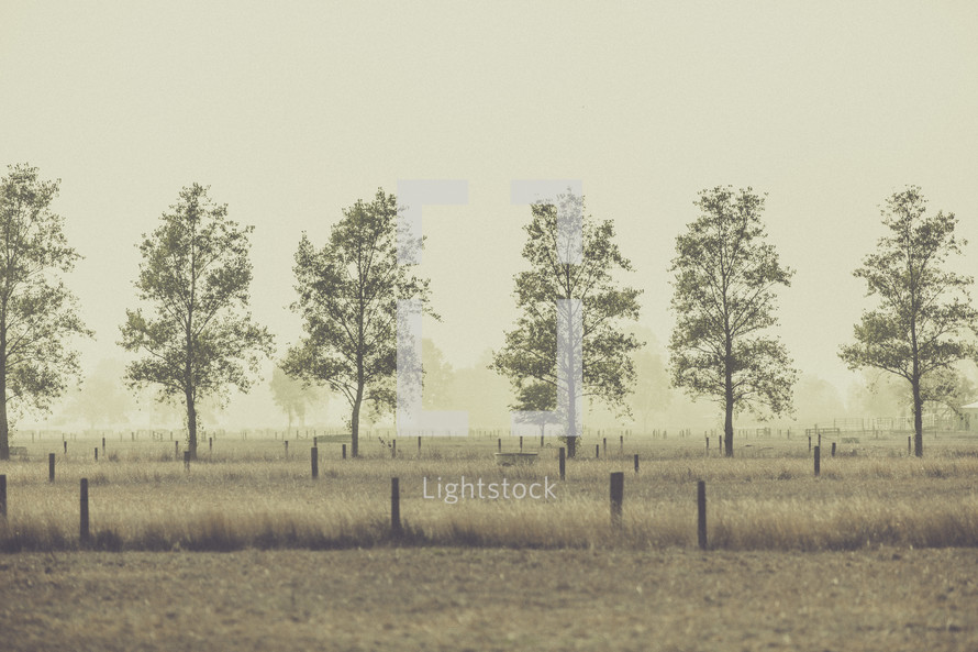 row of trees in a field