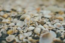 shells on a beach