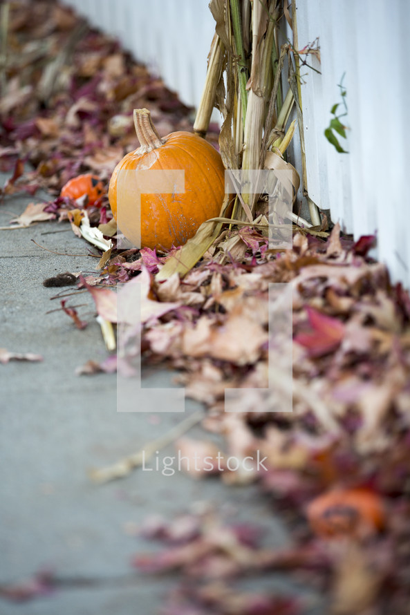 fall leaves and a pumpkin along a sidewalk
