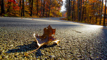 a fall leaf in the middle of a road
