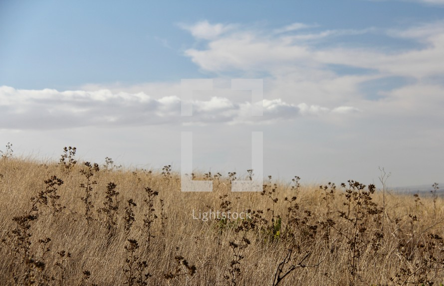 field of brown grasses