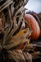 fall corn and pumpkins