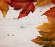 orange leaves on white wood