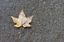 Fall leaf on the pavement.