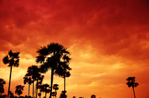 Brilliant red orange and yellow clouds at sunset and silhouettes of palm trees