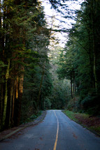 tall trees lining a road