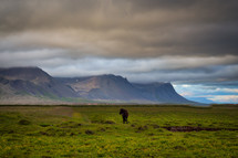 wild horse in a green field