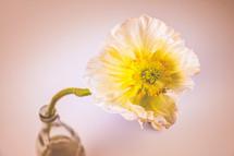 a white flower in a glass bottle