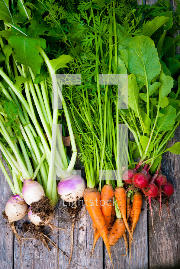 radishes, carrots, and onions