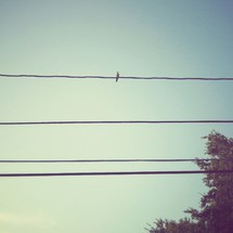 Bird on pole wire