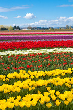 Field of colorful flowers
