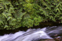 rushing water in a stream