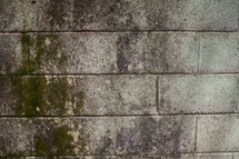 mold and mildew on a concrete wall