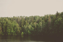 trees in a forest along a lake shore