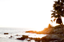 palm trees on a rocky shore