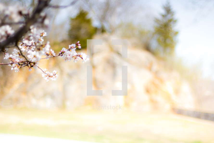 spring flowers on tree branches