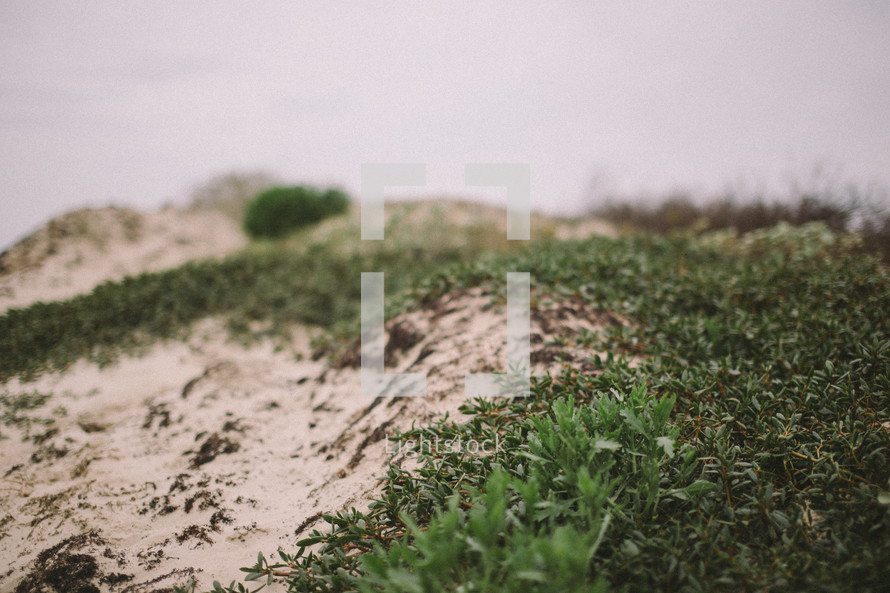 Sand dunes with green growth.
