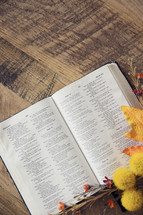fall trimmings around an open Bible
