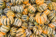orange and green striped pumpkins