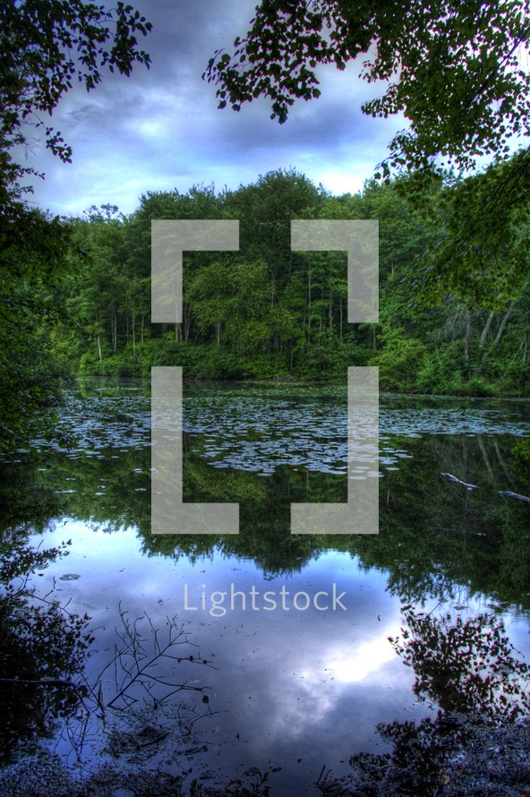 trees reflecting on lake water and lily pads